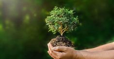 Air pollution by vehicles. Source of air pollution in automobiles. You can reduce air pollution from your vehicle. Plantation for reducing air pollution. Save Environment, World Environment Day, Plastic Pollution, Air Pollution, Lifehacks, Peeling Creme, Agriculture Photos, Sunshine Photos, Small Plants