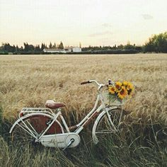 soulmate24.com Photo #bicycle #flowers #field #beauty #nature