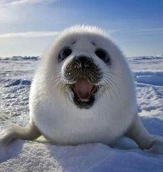 Happy baby seal!