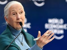 Disrespect for animals caused coronavirus – Jane Goodall - Brush Newsonline Jane Goodall, Cocker Spaniel, News Agency, Chimpanzee, Sustainable Development, Wuhan, Modern Industrial, Newspaper, Animals