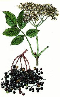 Liecive rastliny