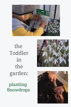 Our toddler has a nice activity for an autumn day: planting Snowdrops bulbs. Autumn Day, Toddler Activities, Planting, Bulbs, Toddlers, Projects To Try, Nice, Garden, Lightbulbs