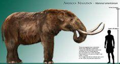 Mastodonte americano. gomphotheres - Cerca con Google