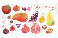 Doc Automne Calques by Lucile Prache is printed with premium inks for brilliant color and then hand-stretched over museum quality stretcher bars. Money Back Guarantee AND Free Return Shipping. Food Painting, Painting Prints, Watercolor Walls, Watercolor Paintings, Watercolour, Food Illustrations, Illustration Art, Fall Fruits, Ink Color