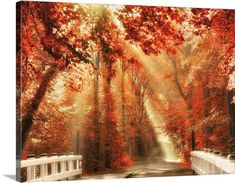 Fall Art - Red for Rest Wall Art by Lars Van De Goor from Great BIG Canvas.
