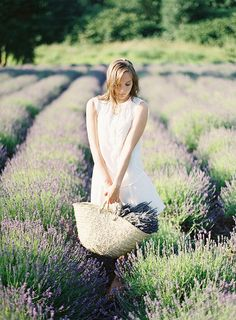 picking the lavender from the fields in the gorgeous provence Provence Lavender, Lavender Cottage, Provence Wedding, Lavender Garden, Lavender Blue, Lavender Fields, Lavander, Once Wed, Great Pictures