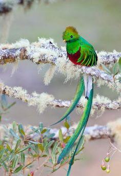 Long feather bird