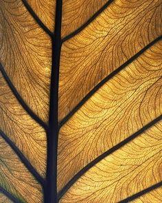 leaf fractals