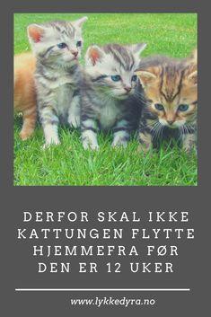 Derfor skal ikke kattungen flytte hjemmefra før den er 12 uker. Animals, Nature, Animales, Animaux, Animal, Animais