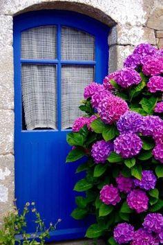 Île-aux-Moines, Morbihan, France door, The hydrangea steals the show! Hortensia Hydrangea, Hydrangea Care, Purple Hydrangeas, Beautiful Gardens, Beautiful Flowers, Big Flowers, Climbing Hydrangea, Garden Cottage, Cottage Door
