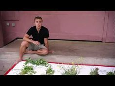 Wild Edibles with Sergei Boutenko (part 1 of 4)...excellent video series.