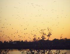 Aves de paso | Flickr: Intercambio de fotos