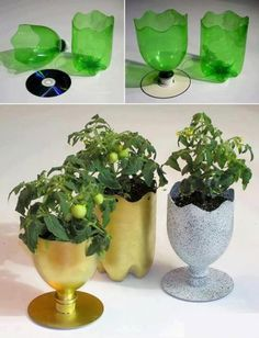 Flower pots made from CD and plastic bottles.