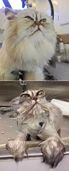 Hilarious Animals Before And After A Bath - 14 Pics