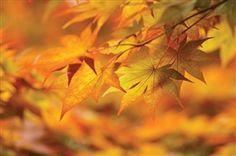 +Наступающий+ноябрь+постепенно+устанавливает+свои+правила.+Эти+правила+просты:+лаконичность,+монохромность,+сдержанность,+чистота