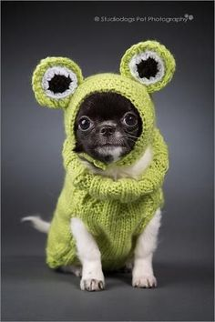 Chihuahua...Frog? LOL!!!