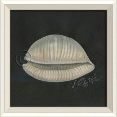 Seashell No. 2