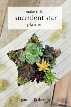 This festive succulent star planter centerpiece makes for a beautiful container display and table decoration. See how to make it + get the full plant list.