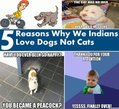 Why We Indians Love Dogs And Not Cats!!!
