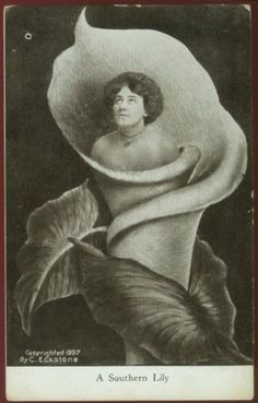 "A fantasy postcard of a beautiful woman inside a calla lily from 1907 titled ""A Southern Lily""."