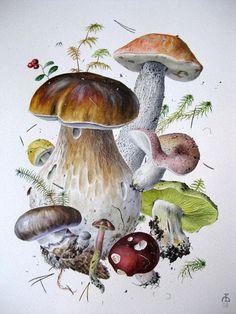 Акварельные грибы Александра Вязьменского. - Сергей Погонин