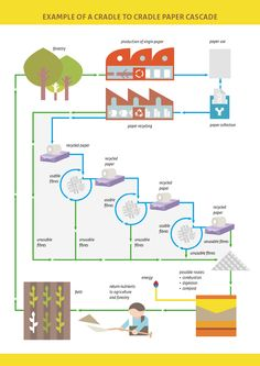Infographic: A cradle to cradle paper cascade