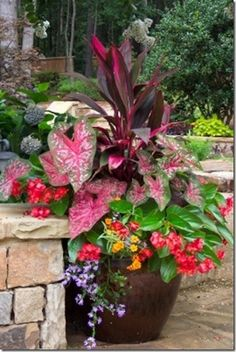 Container Gardening Shady Pots: main dark leaved plant with pink is Dracena 'baby doll', the pink and green speckled heart shaped leaf on the left is a Caladium, the reddish flowers are from the begonia 'angel wing', the purple trailing plant is Scaevola, Lawn And Garden, Garden Pots, Spring Garden, Box Garden, Porch Garden, Spring Summer, Autumn Garden, Easy Garden, Summer Heat