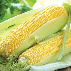 Sweetcorn 'Lark' F1 Hybrid (Tendersweet) - All Other Vegetable Seeds - Thompson & Morgan
