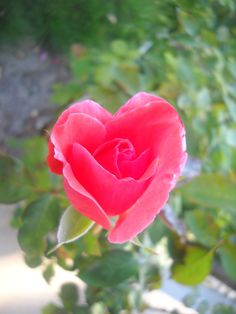 Good morning, baby. :) This rose heart comes from me to you with all my love. :)…
