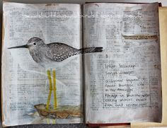 beads buttons & birds: Alpha Challenge - Y is for yellowlegs