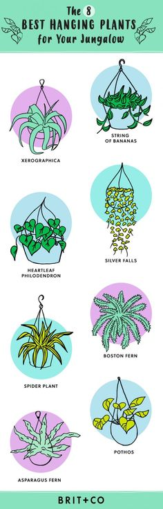 This Hanging Indoor Plant Guide Will Help You Pick the Best Greenery for Your Space via Brit + Co