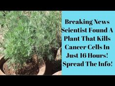 Scientist Found A Plant That Kills Cancer Cells In Just 16 Hours! Spread The Info! - YouTube