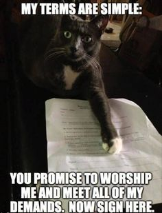 Promise to worship me