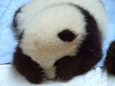 PANDA. You are probably sleepy.