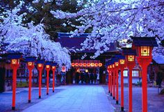 I must go back to Japan soon, it is SO beautiful.