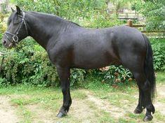 Beautiful Horses, Pony, World, Animals, Horses, Hungary, Pretty Horses, Pony Horse, Animales