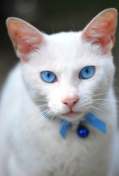 Beautiful . . . doesn't this cat look like  he can see into your soul and knows  what you are thinking and feeling . . . ?