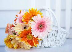 Gerbera, Glass Vase, Table Decorations, Plants, Home Decor, Decoration Home, Room Decor, Plant, Home Interior Design
