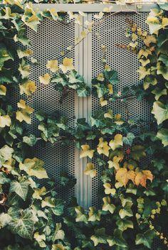 Photo of green leafed plant – Garden – Vertical Gardening Strawberries List Garden Images, Garden Pictures, Garden Photos, Climbing Plants Fast Growing, Grapevine Growing, Blossom Garden, Growing Gardens, Gardens By The Bay, Green Trees