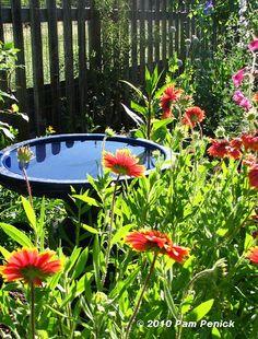 Blanketflower and bird bath