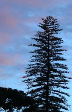 Tree / Sky / Clouds