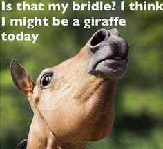I think I might be a giraffe right about NOW. My horse does this!