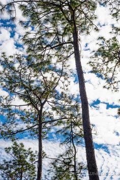 28 Best Trees Of North Carolina Images North Carolina