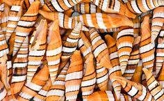 Orange Spirals 8220 jpg