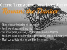 Celtic Tree Astrology - Rowan: the Thinker - January 21 to February 17 Astrology Meaning, Celtic Astrology, Astrology And Horoscopes, Astrology Zodiac, Zodiac Signs, Pisces, Celtic Druids, Age Of Aquarius, Astrology