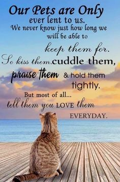 Animals And Pets, Funny Animals, Cute Animals, Cat Quotes, Animal Quotes, Cat Sayings, Animal Poems, Pet Loss Grief, Pet Remembrance