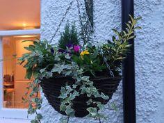 Autumn winter hanging baskets Saffron Walden