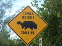 Amerika 2011 pas op voor overstekende schildpadden