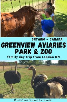 Great day trips around London, Ontario - Family trip to Greenview Aviaries Park & ZOO in south-western Ontario. All you need to know before you visit. #greenviewzoo #greenviewaviariesparkandzoo #ontario #familytrips #roadtrip #thingstodowithkids #londonontario #on2continents Family Day, London City, Day Trips, Family Travel, Ontario, Places To See, Road Trip, Canada, Park