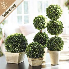 Southern Living Preserved Boxwood Topiary - 2 for either side of mirror